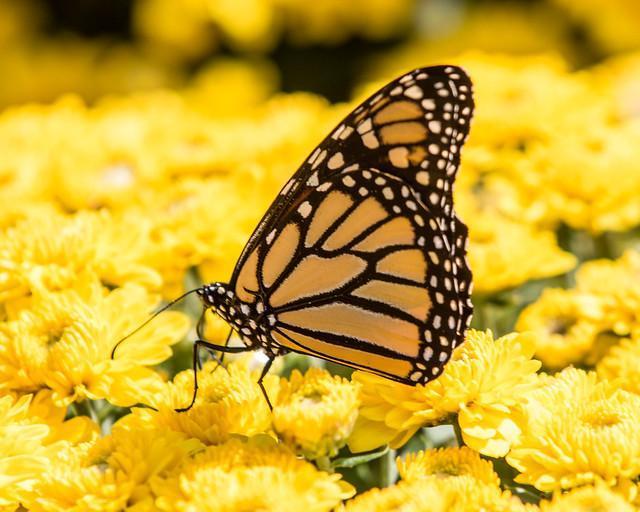 Butterfly Release 1